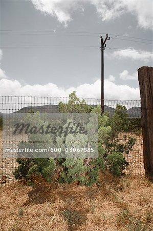 Arbuste de clôture, Dryden, Texas, USA