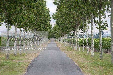 Country Road, South Island, Nouvelle-Zélande