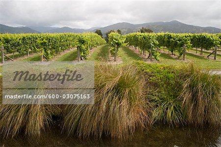 Blenheim, South Island, Nouvelle-Zélande