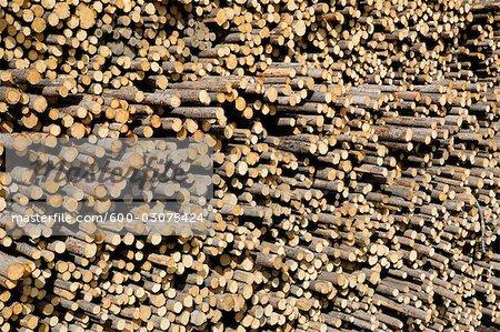 Pile de grumes de pin, Williams Lake, Colombie-Britannique, Canada