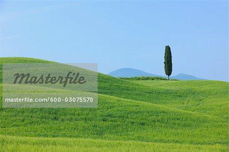 Pienza, Siena Province, Val d'Orcia, Tuscany, Italy