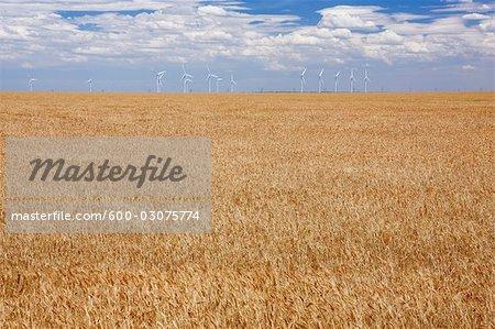 Parc éolien et champ de blé près d'Amarillo, Texas, USA