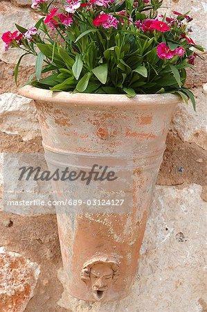 Carnations in a terracotta pot