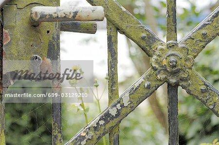Weathered garden gate - close up