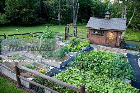 Organic Raised Bed Garden