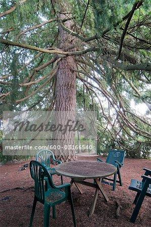 Chaises et Table, sous le grand sapin, White Rock, Colombie-Britannique, Canada
