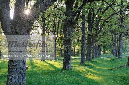 Baum Grove, Franken, Bayern, Deutschland
