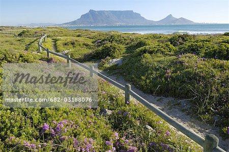 Fleurs de printemps sur le sentier côtier à sunset beach, Cape Town, Western Cape Province, Afrique du Sud