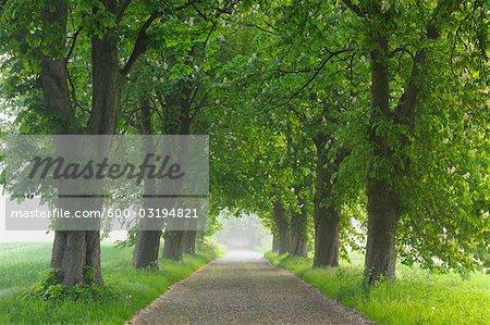 Road, l'île de Rügen, Mecklembourg, Mecklembourg-Poméranie occidentale, Allemagne