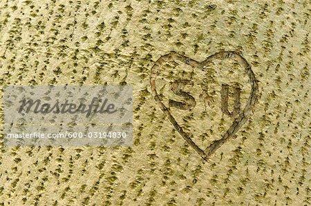 Herz und Initialen in Baumstamm geschnitzt