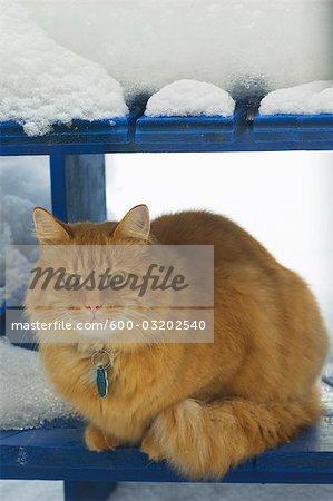 Porträt von Cat Outdoors, Quebec, Kanada