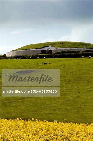 Rapeseed field near passage tomb at Newgrange, County Meath, Ireland