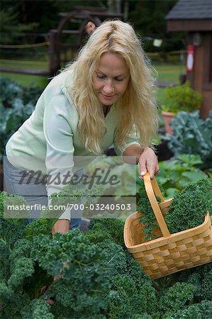 Woman in Garden Picking Organic Kale