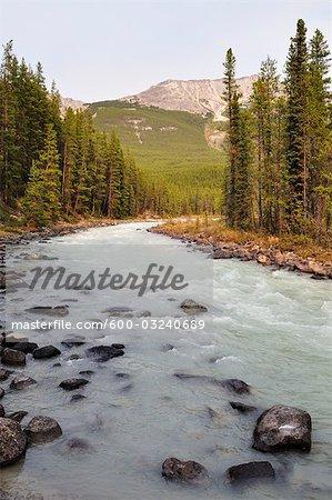La rivière Sunwapta, Parc National Jasper, Alberta, Canada