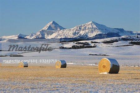 Prairie and Rocky Mountains, Near Pincher Creek, Alberta, Canada
