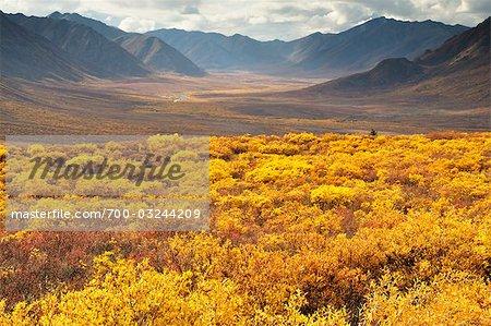Gamme de Tombstone et automne toundra, Tombstone Territorial Park, territoire du Yukon, Canada