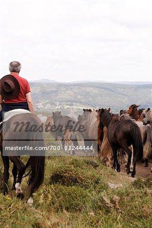 Rapa Das Bestas, Sabucedo, Galicien, Spanien