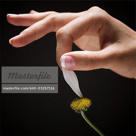 Main de la jeune femme plumaison pétale de fleur