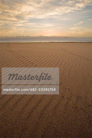 Bird tracks on the beach sand at dawn, Main Beach, St Lucia, Kwazulu-Natal, South Africa