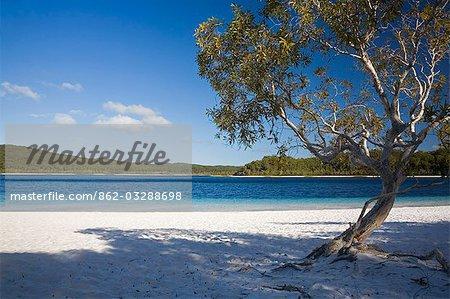 Les tons sables et bleus blancs du Mckenzie lac d'eau douce. Le lac est une attraction populaire pour les visiteurs et est l'un des nombreux lacs perchés sur l'île de Fraser.