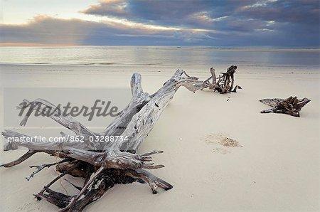 Bois flotté sur la côte ouest de l'île de Fraser.
