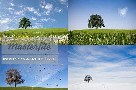 oak tree on hill in four seasons