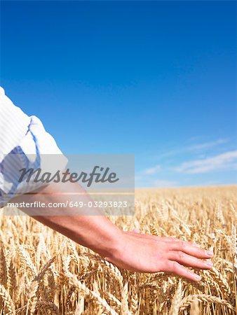 Mans main dans le champ de blé