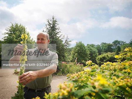 Jardinier inspectant des fleurs jaunes