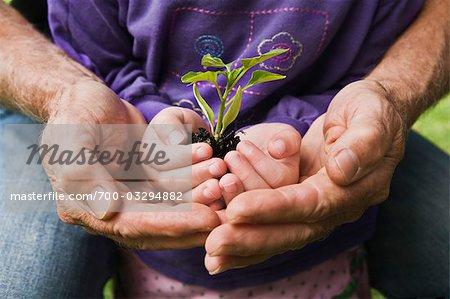 Hände von Mann und Kind hält Sämling