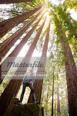 Femme debout dans la forêt de séquoias, près de Santa Cruz, Californie, USA