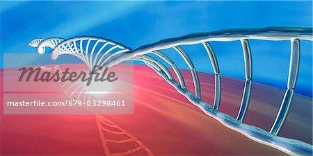 DNA (deoxyribonucleic acid) molecule, computer artwork.