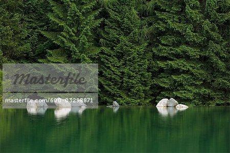 Reflexion der Felsen im Wasser, Wald im Hintergrund, nahe Fuschl, Salzburg, Österreich