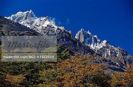 Feuillage d'automne en face de la corniche sommet du Paine Grande