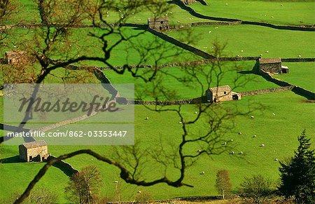Swaledale, Yorkshire, l'Angleterre. Murs de pierres sèches et des granges de champ dans le fond de la vallée de Gunnerside dans le Parc National de Yorkshire Dales.
