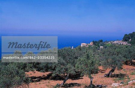Les oliviers et les falaises sur la côte ouest près de Valldemossa