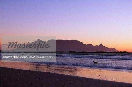 Un chien est à court de surf sur une plage près de Bloubergstrand à Cape Town et de la montagne de la Table derrière