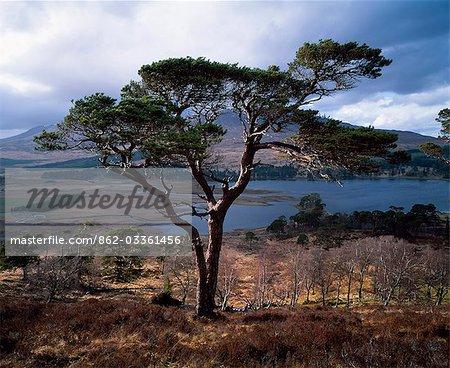 Arbres à Loch Tulla.