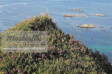 Une colline couverte de graminées sauvages et heather surplombant le Loch Tarbert