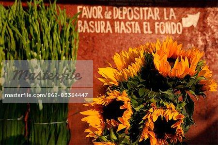 Mexico,Mexico City. Sunflowers at the market in Azcapotzalco,Mexico City