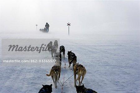 Norway,Troms,Lyngen Alps. Travel over the mountains of the Lyngen Alps via dog sled guided by veteran explorer Per Thore Hansen.