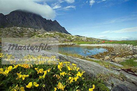 Norvège, Nordland, Helgeland. La côte de la Norvège est parsemé de nombreuses îles isolées, dominé par les pics et couverte pendant les mois d'été de pans entiers de fleurs sauvages