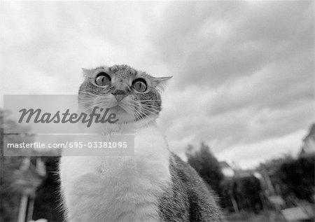 De chat visage, noir et blanc, faible angle vue