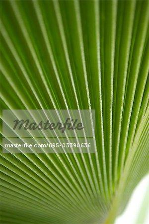 Palm leaf, extreme close-up
