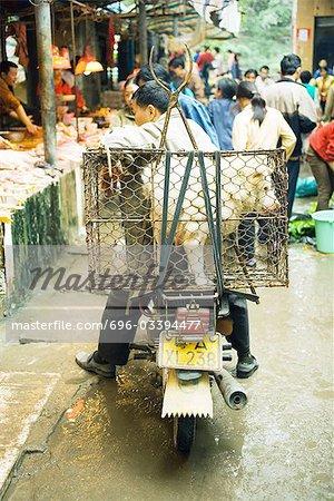La Chine, province du Guangdong, homme assis sur un vélomoteur dans le marché, chien en cage l'arrière de la moto