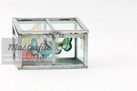 Fausses papillons à l'intérieur de la cage de verre fermé