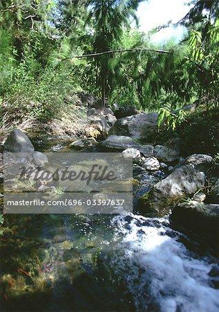 Cours d'eau en forêt
