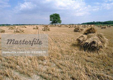 Meules de foin France, vallée de la Loire, champ