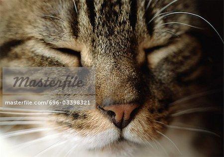 Sleeping cat's face, close-up
