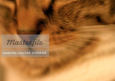 Cat's face, close up, blurry.