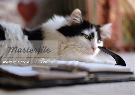Chat noir et blanc se trouvant à côté de l'ordre du jour